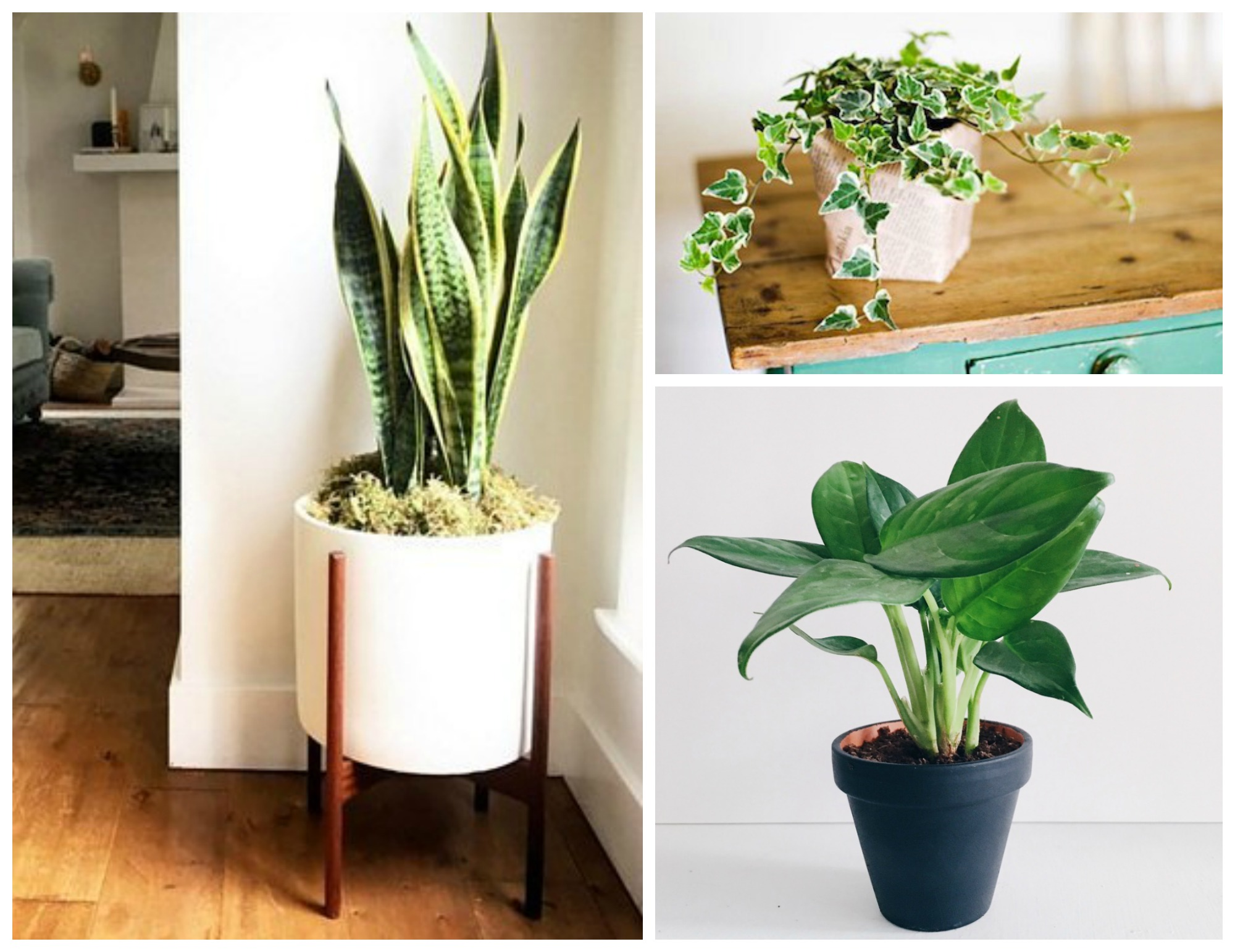 12 amazing looking air purifying plants you need in your home for Low maintenance air purifying plants