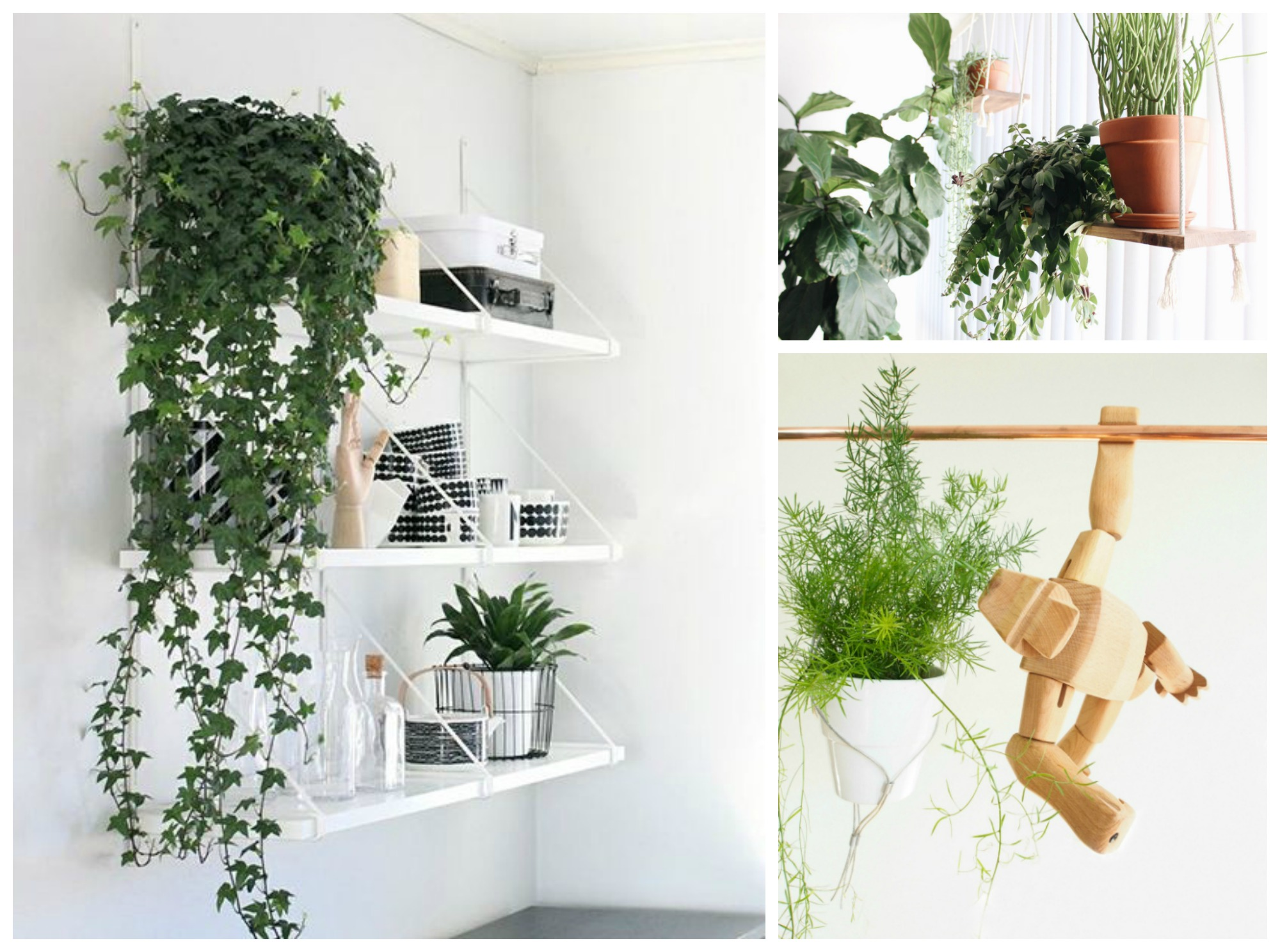 10 Hanging Plants That Ll Make Your Home Look Amazing Chasing Foxes